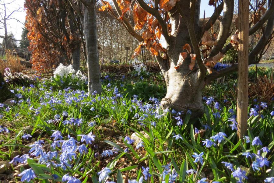 Frühling 4 Schaugarten Seeshaupt